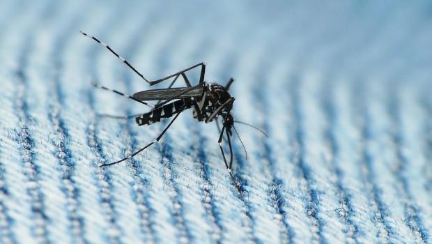 Zika: A Global Health Emergency