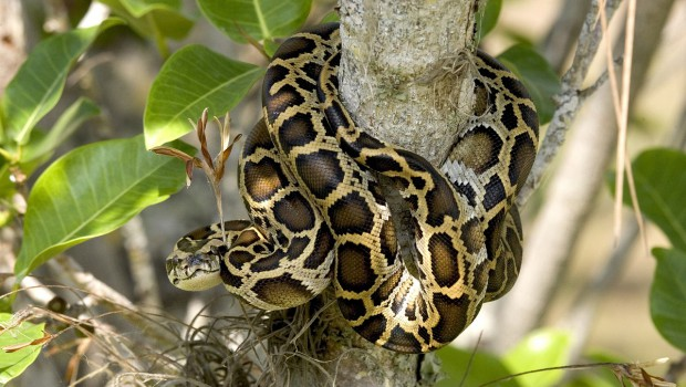 Can Snakes Cure a Broken Heart?