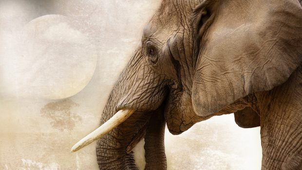 New discussions attempt to tackle the ivory trade in the UK