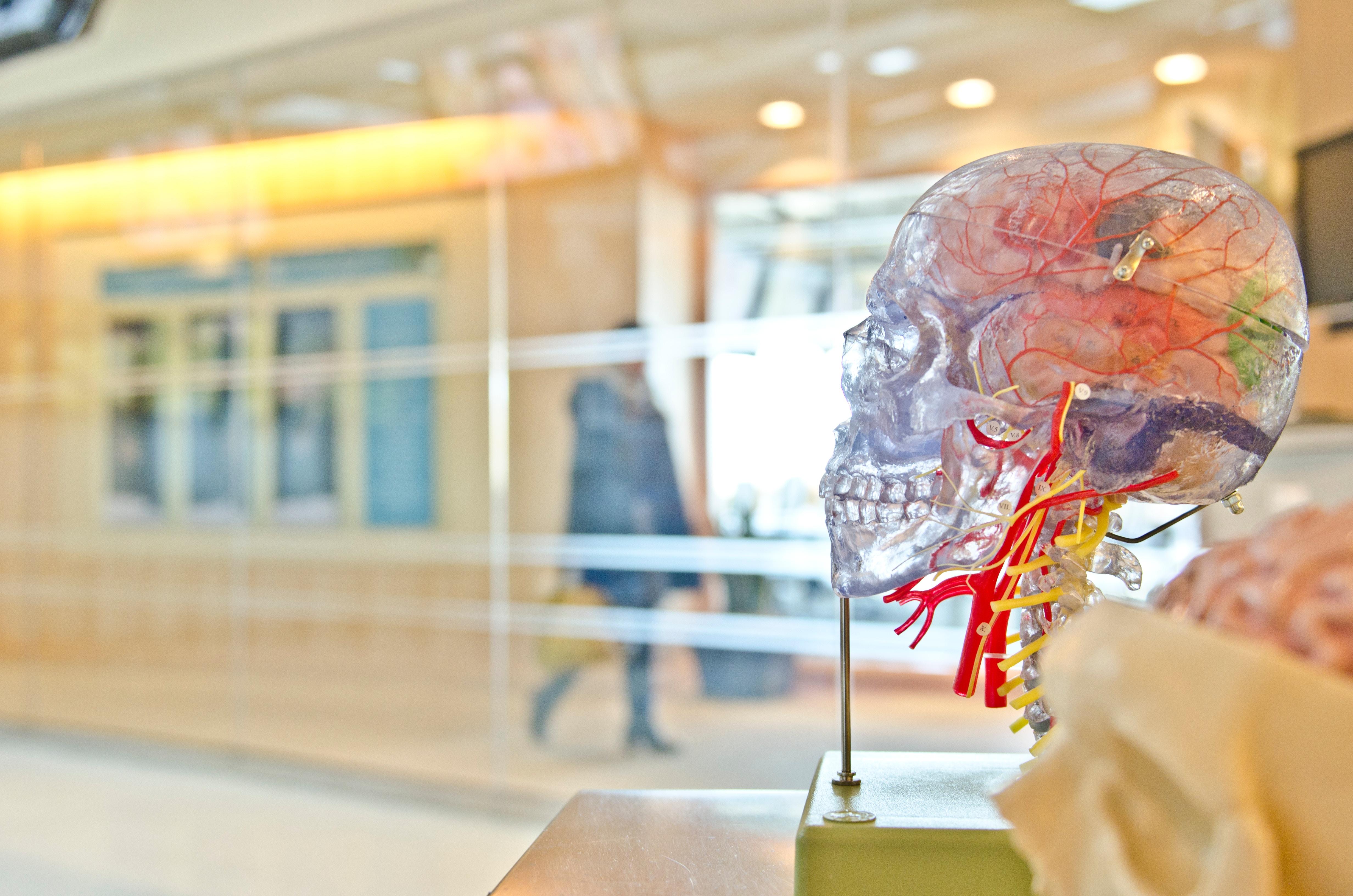 science-skull-biology