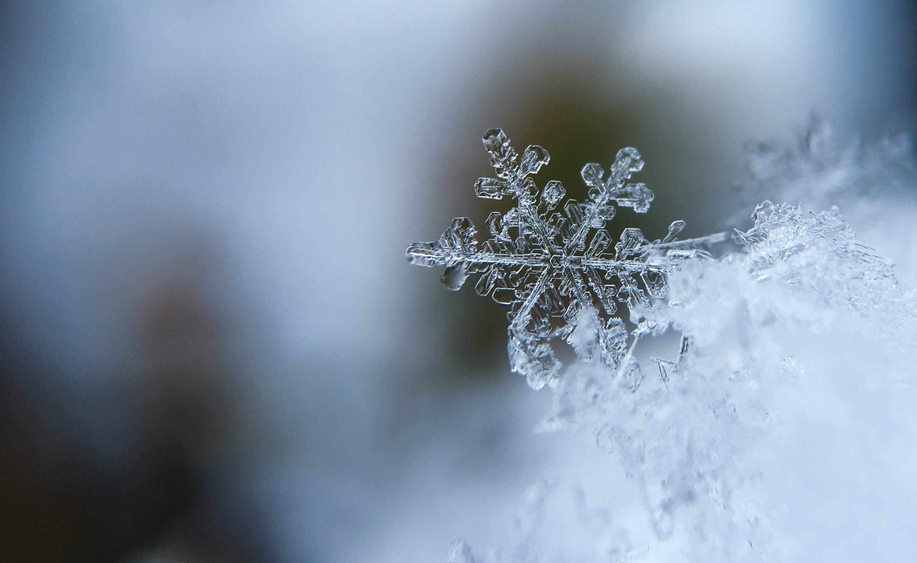 snow-day-snowflake